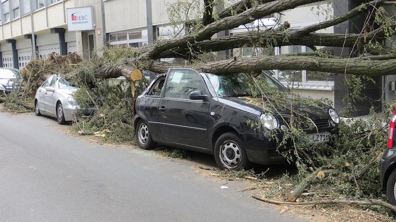 Umgestürzter Baum liegt auf Autodächern vor einem Geschäft